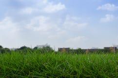 Trawa zielony jard Obraz Stock