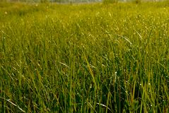 trawa zroszony ranek Fotografia Royalty Free