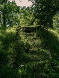 Trawiaści betonowi schodki w parku zdjęcia royalty free