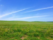 Trawiasta łąka i niebieskie niebo zdjęcia royalty free