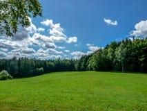 Trawiasta łąka między drewnami Obrazy Stock