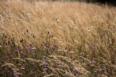 Trawiasta łąka z kwiatami Obrazy Royalty Free