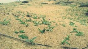Trawiasta pustynia Zdjęcia Royalty Free