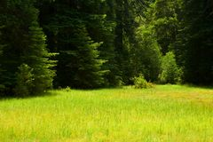 Trawiasta zielona łąka Zdjęcie Royalty Free