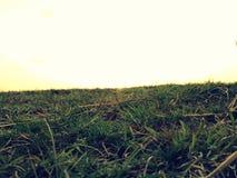 Trawiasta ziemia Zdjęcia Stock