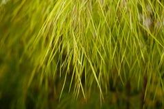trawiasty drzewo Obrazy Royalty Free