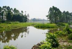 Trawiasty i zachwaszczony nadbrzeżny w dzikim z budową w bac zdjęcie royalty free
