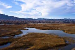 trawiasty jezioro Fotografia Royalty Free