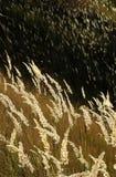 Trawiasty krajobraz obrazy stock