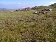 Trawiasty plateau z skałami Obraz Stock