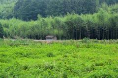 Trawiasty pole i bambusa las Obraz Stock