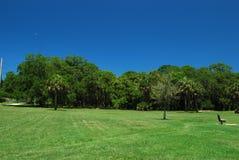 Trawiasty pole z niebieskimi niebami w natury prezerwie w Sarasota Floryda Zdjęcie Stock