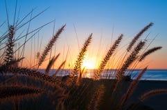trawiasty wschód słońca zdjęcie royalty free