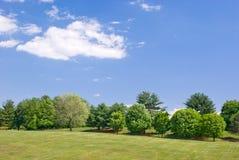 trawiasty zbocze krajobrazu Obrazy Royalty Free