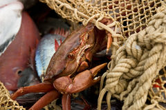 Trawl fisheries Stock Photos