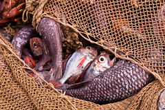 Trawl fisheries Stock Photo