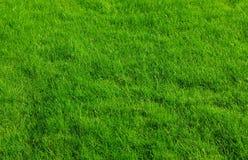 trawnik Fotografia Stock