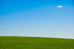 trawnik Obraz Royalty Free