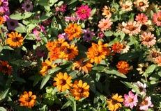 trawnik kwiatów Fotografia Royalty Free