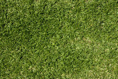trawnik trawy. Zdjęcie Stock