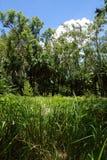 Trawy łąka w tropikalnym lesie deszczowym Obrazy Royalty Free