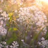 trawy łąki deszcz Zdjęcia Stock