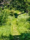 Trawy ścieżka Obraz Royalty Free