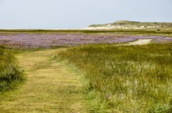 Trawy ścieżka na wyspie Texel Zdjęcie Royalty Free