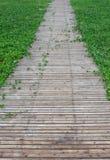 trawy ścieżki drewno Obraz Royalty Free