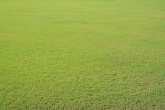 trawy śródpolna zieleń Obrazy Stock