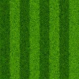 trawy śródpolna zieleń ilustracji