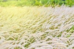 Trawy światło słoneczne i kwiat Obraz Stock