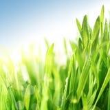 trawy świeża wiosna Fotografia Royalty Free