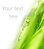 trawy świeża zieleń Obraz Royalty Free