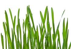 trawy świeża zieleń Zdjęcie Royalty Free