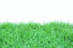 trawy świeża zieleń Obraz Stock