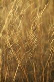 trawy Obrazy Royalty Free