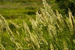 trawy Obraz Stock