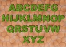 Trawy abecadło przedstawia listy z wiosny zielonej trawy teksturą dla edukaci lub ekologicznego pojęcie projekta Eco chrzcielnica ilustracji