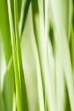 trawy abstrakcjonistyczna zieleń Obrazy Royalty Free