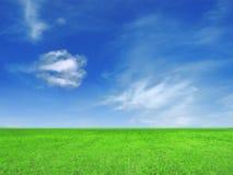 trawy błękitny niebo Obraz Royalty Free