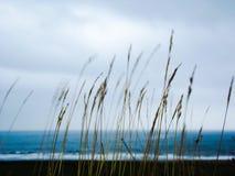 Trawy blisko plaży Zdjęcie Stock