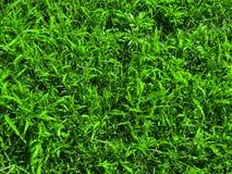 Trawy deseniowy tło przy sping, zakończenie w górę obrazy royalty free