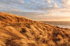 Trawy diuna w wieczór świetle z widokiem morza zdjęcia royalty free