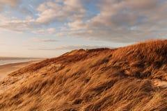 Trawy diuna w wieczór świetle z widokiem morza obrazy stock