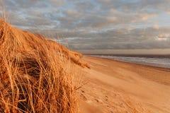 Trawy diuna w wieczór świetle z widokiem morza obrazy royalty free