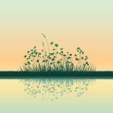 trawy dorośnięcie Zdjęcia Royalty Free