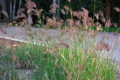 Trawy drogi pole kwiaty, menchia kwiaty, śródpolny tło, kwitnie tło obraz stock