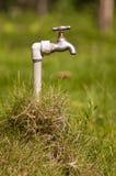 Trawy faucet Zdjęcie Stock