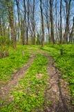 trawy góry ścieżka obraz royalty free